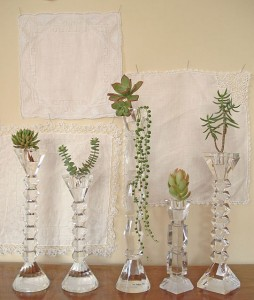 Crystal candlesticks used to showcase succulents, vintage handkerchief background